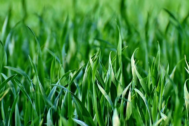 meadow-3338281_640